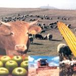 где получить кредит на развитие агробизнеса