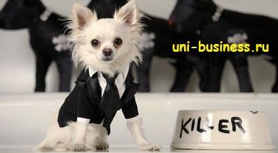 Бизнес идеи для собак бизнес план подробно