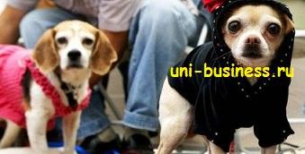 бизнес идеи животные