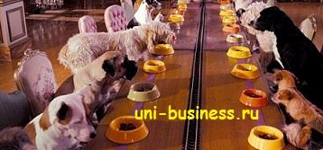 бизнес идея с собаками