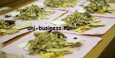 бизнес на производстве лекарственных трав