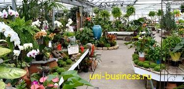 бизнес на растениях