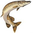 бизнес разведение рыб