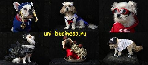 варианты костюмов для собак