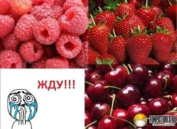 выращивание ягод как бизнес