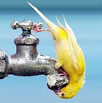 добыча воды для бизнеса