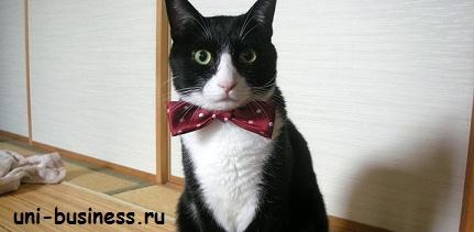 кот! бизнес идея