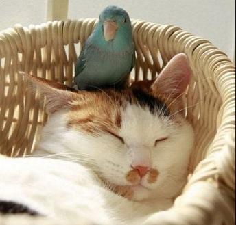 попугай и кот