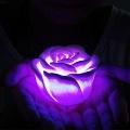 светящиеся цветы как бизнес