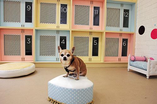 собака в гостинице для животных