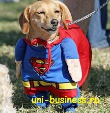 собака супермен