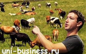 цукерберг забивает скот