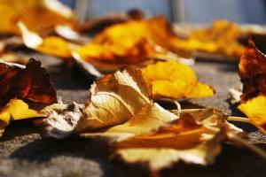 Бизнес идеи на листьях