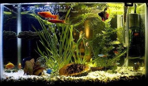 Бизнес по разведению аквариумных рыбок