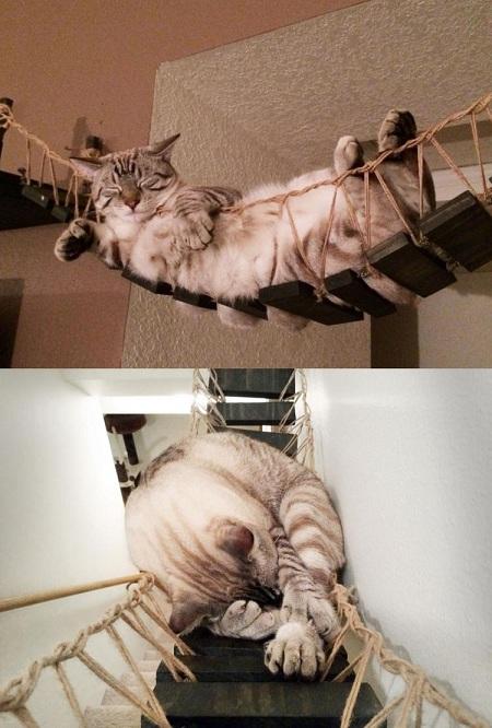 мостик для кота