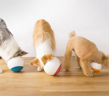 необычные миски для собак