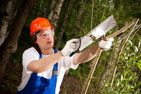 уход за деревьями как бизнес