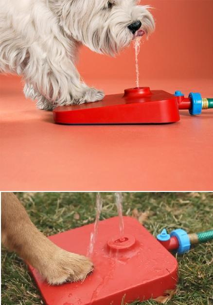 умная поилка для собаки